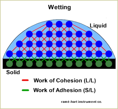 how to adhesion and cohesion explain capillary action
